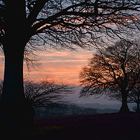 Buy canvas prints of Sunset through the trees by Pete Hemington