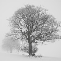 Buy canvas prints of Misty trees by Pete Hemington