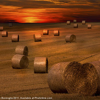 Buy canvas prints of Harvest Sunset by Darren Burroughs