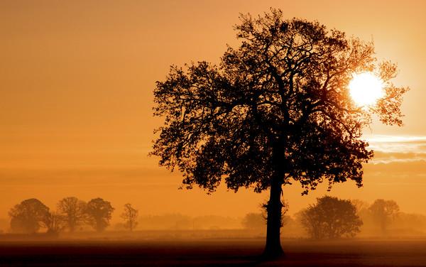 A Rural Norfolk Sunrise Canvas Print by Darren Burroughs