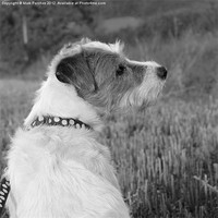 Buy canvas prints of Patient Parsons Dog Sitting (brighter) by Mark Purches