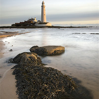 Buy canvas prints of St Mary's Island by Steve Glover