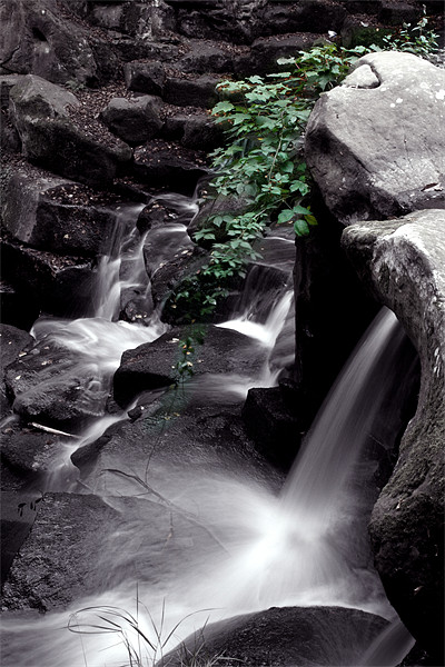 Ivy water fall Framed Mounted Print by Doug McRae