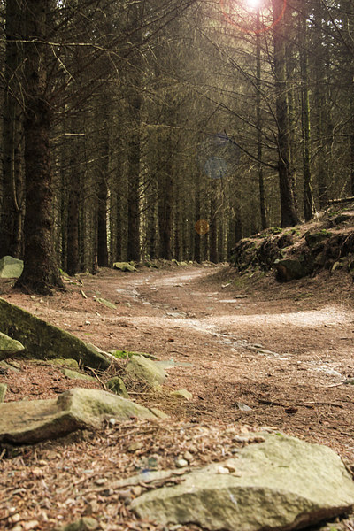 Forest Track Canvas print by Sean Wareing