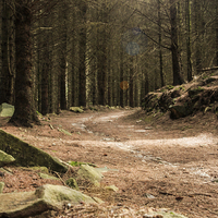 Buy canvas prints of Forest Track by Sean Wareing