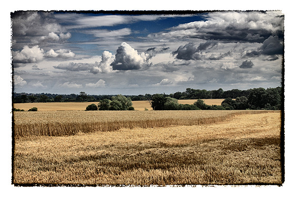 Clouds & Corn Canvas print by peter tachauer