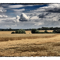 Buy canvas prints of Clouds & Corn by peter tachauer