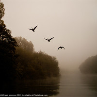 Buy canvas prints of River Thames Geese by Dawn O'Connor