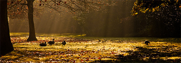 Geese in Winter Sunbeams Canvas print by Dawn O'Connor