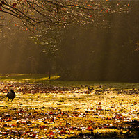 Buy canvas prints of Geese in Winter Sunbeams by Dawn O'Connor
