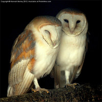 Buy canvas prints of Barn Owl Love by Hannah Morley