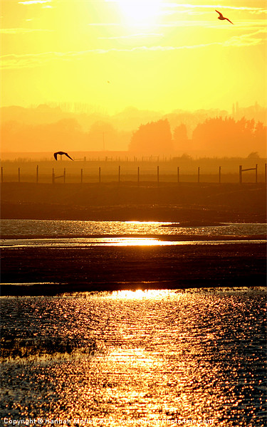 Rye Harbour Nature Reserve, Sunset Canvas print by Hannah Morley