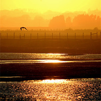 Buy canvas prints of Rye Harbour Nature Reserve, Sunset by Hannah Morley