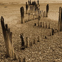 Buy canvas prints of Beach Timbers by Anthony Michael Poynton