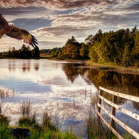 Buy canvas prints of In Flight by Sam Smith