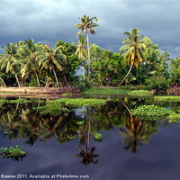 Buy canvas prints of Palm Trees in a Storm Kerala by Serena Bowles