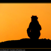 Buy canvas prints of Sunset Silhouette by Serena Bowles