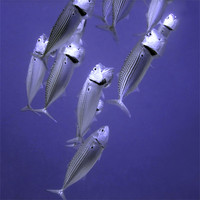 Buy canvas prints of Fish Feeding with Mouths Open by Serena Bowles