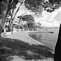 Buy canvas prints of Pine Walk Puerto Pollensa by Louise Godwin
