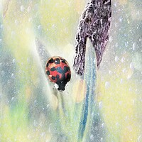 Buy canvas prints of Lady Bird Bug  by Louise Godwin