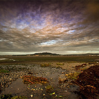 Buy canvas prints of View of Scrabo by pauline morris