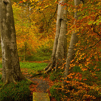 Buy canvas prints of Autumn Colour by pauline morris
