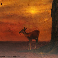 Buy canvas prints of A YOUNG DEER by Tom York