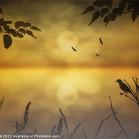 Buy canvas prints of AMBER MORNING by Tom York