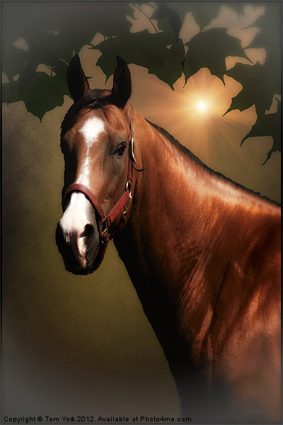 PORTRAIT OF A HORSE Canvas print by Tom York