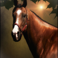 Buy canvas prints of PORTRAIT OF A HORSE by Tom York