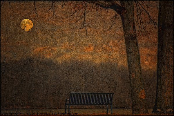 A PARK BENCH Canvas print by Tom York