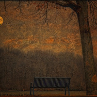 Buy canvas prints of A PARK BENCH by Tom York