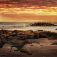 Buy canvas prints of SEAGULLS AT THE BEACH by Tom York
