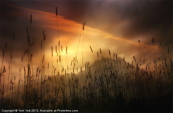 MOUNTAIN MAGIC Framed Print by Tom York