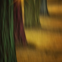 Buy canvas prints of THE RAINBOW FOREST by Tom York