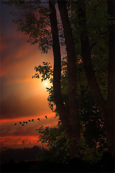 LATE AUGUST SUNSET Canvas print by Tom York