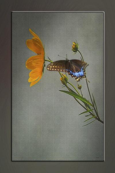 A BRIEF VISIT Canvas print by Tom York