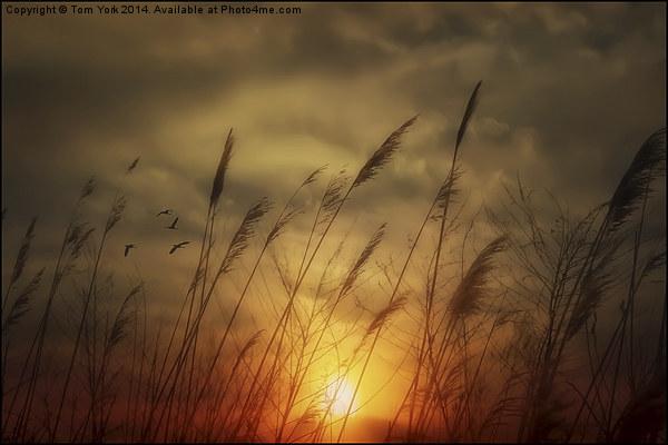 Following The Sun Canvas print by Tom York