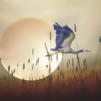 Buy canvas prints of Flying Home by Tom York