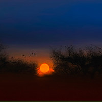 Buy canvas prints of Sunset In The Apple Orchard by Tom York