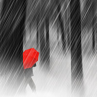 Buy canvas prints of Just Walking In The Rain by Tom York
