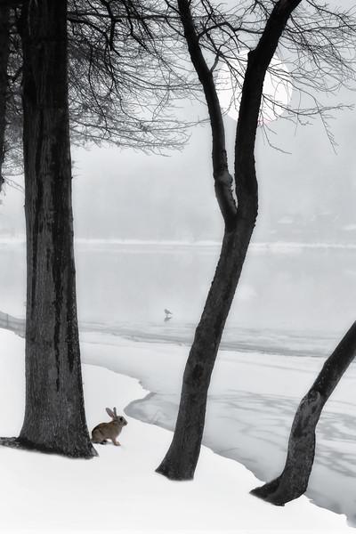 Frozen Lake Canvas Print by Tom York