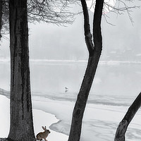 Buy canvas prints of Frozen Lake by Tom York