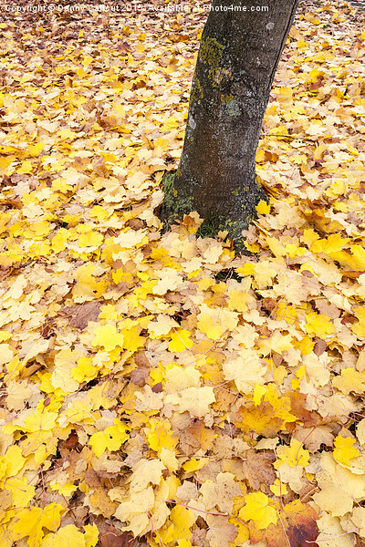 Autumn Leaves Canvas print by Danny Callcut