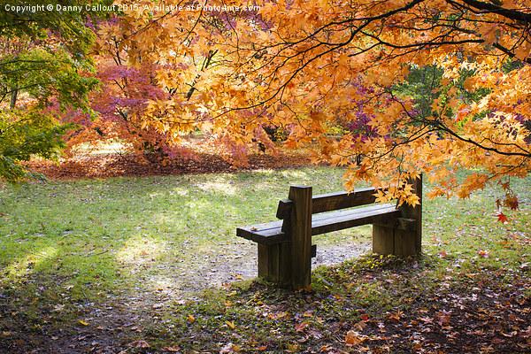 Autumn Bench Canvas Print by Danny Callcut