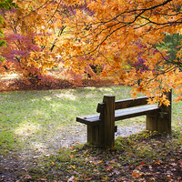 Buy canvas prints of Autumn Bench by Danny Callcut
