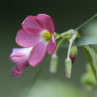 Buy canvas prints of Pink Flower by Brian Beckett