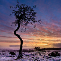 Buy canvas prints of Crooked Tree by Paul Appleby