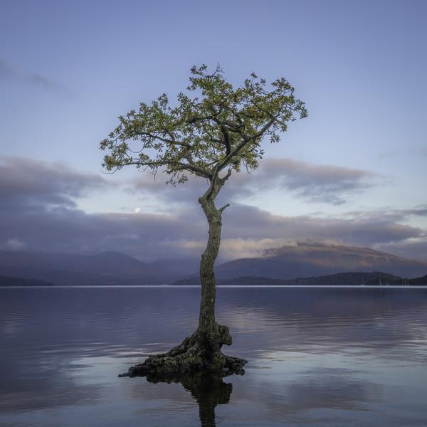 Loch Lomond, Milarrochy Bay Canvas print by Paul Appleby