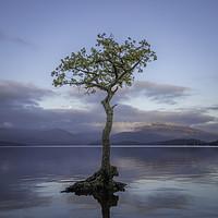 Buy canvas prints of Loch Lomond, Milarrochy Bay by Paul Appleby